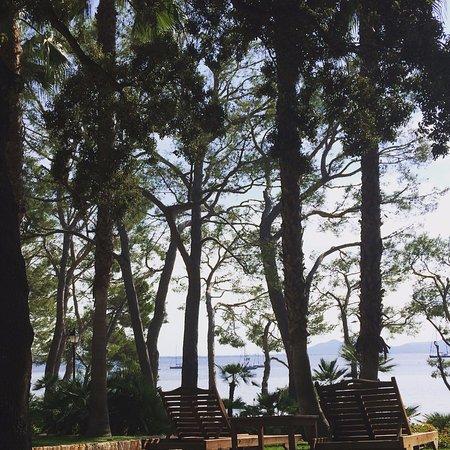 Formentor, a Royal Hideaway Hotel: Zona ajardinada junto a la piscina