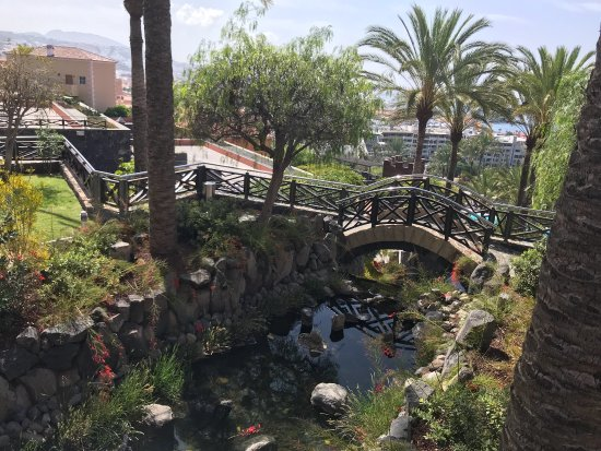 Picture of melia jardines del teide costa for Jardin del teide