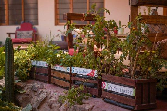 Huerto Con Cajas De Frutas Recicladas Picture Of Pakakuna - Cajas-de-fruta-recicladas