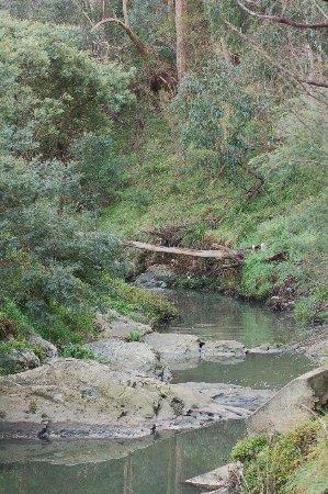Mitcham, Australia: Yarran Dheran Nature Reserve