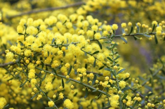 Mitcham, Australië: Yarran Dheran Nature Reserve