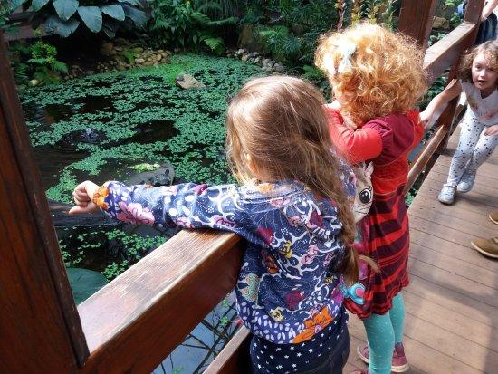 Grevenmacher, ลักเซมเบิร์ก: Jardin Des Papillons