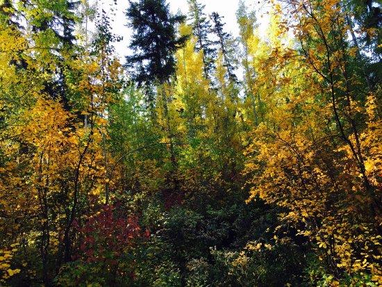 Ten Mile Lake Provincial Park: photo3.jpg