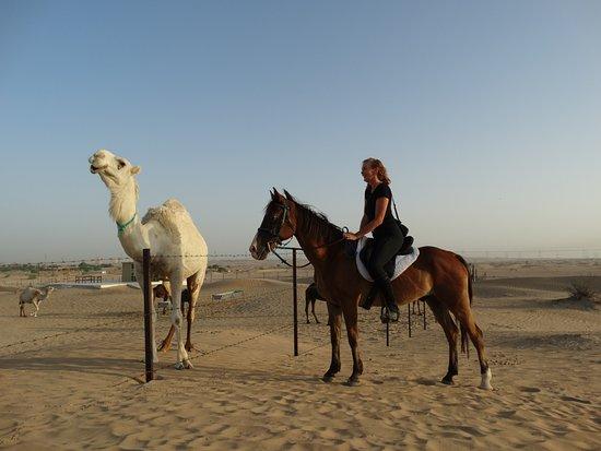 Dubai Desert Horse Riding Experience