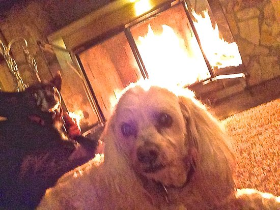 Andril Fireplace Cottages: My dearest little Fritzi enjoying the fire in our cabin.