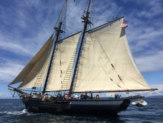 ดานาพอยต์, แคลิฟอร์เนีย: Watching the tall ships in Dana Point come back from a nice, long sail