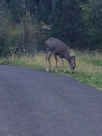 Cle Elum, WA: One of the many resident deer