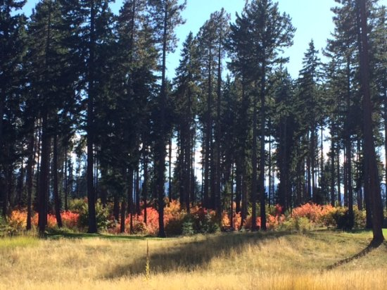 Cle Elum, WA: Evergreen trees and vine maple trees in fall color
