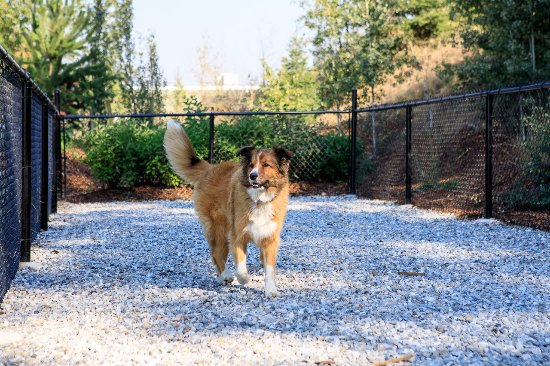 Golden, Canada: A dog run for our four legged travellers