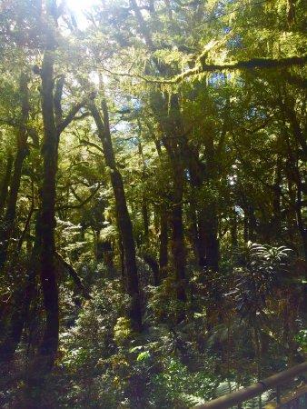 Fiordland National Park (Te Wahipounamu): photo4.jpg