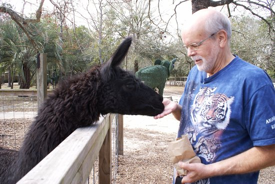 Emerald Coast Wildlife Refuge Zoological Park: Llama feeding