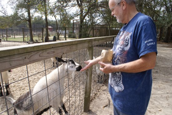 Emerald Coast Wildlife Refuge Zoological Park: Goat feeding