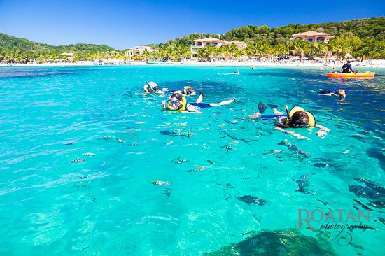 Roatan Webster Tours Snorkeling At West Bay Tabyana Beach