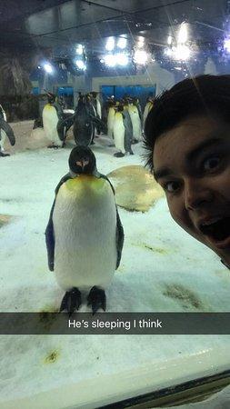 SEA LIFE Kelly Tarlton's: Penguins at the aquarium