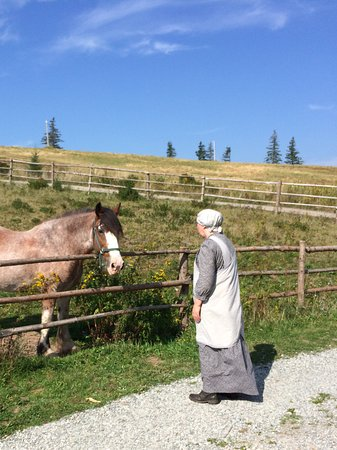 Highland Village: The village horse looking for a treat!
