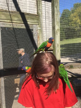 Horse Cave, KY: Lorikeets