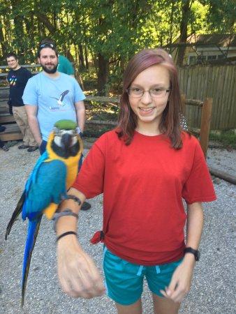 Horse Cave, KY: Parrots