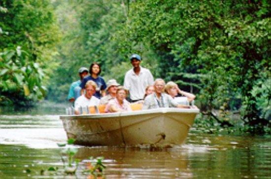 Klias Wetlands 'River Safari