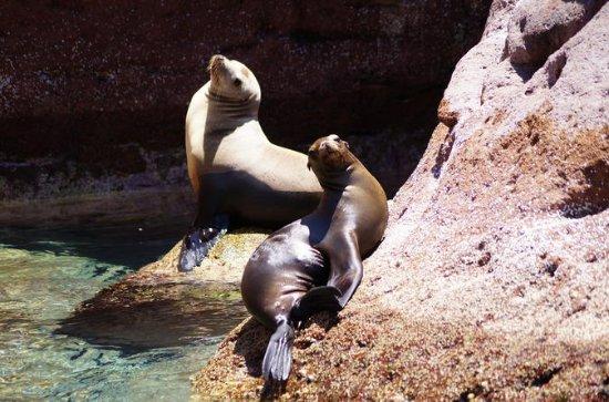 Espiritu Santo Island Tour: Day trip...