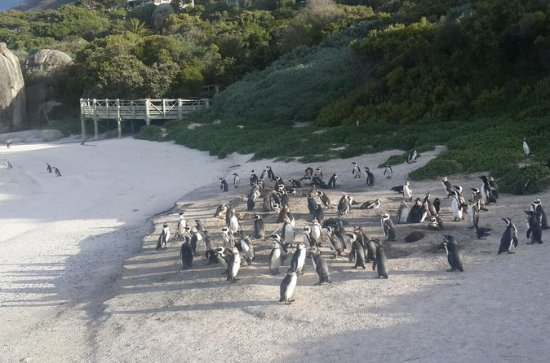 South Africa's Cape Peninsula Tour