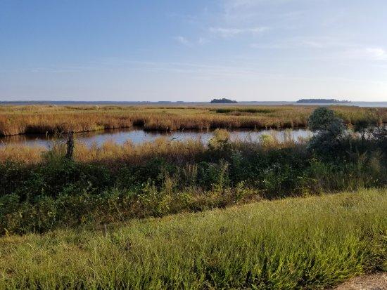 Oxford, MD: Visit National Parks - Blackwater National Wildlife Refuge Center (28.8 mi)