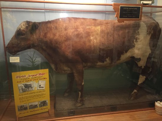 O'Fallon Historical Museum: The World's Largest Steer.