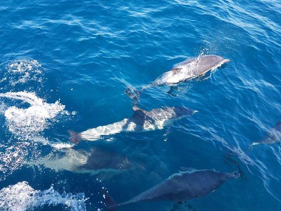 ดานาพอยต์, แคลิฟอร์เนีย: Even more dolphins