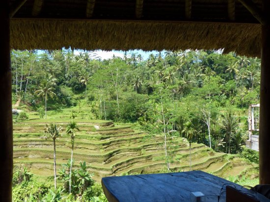 Nusa Dua Peninsula, Indonesia: Rice terraces viewed from our private lunch position