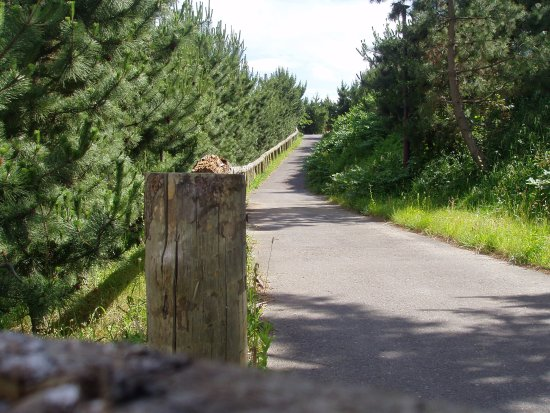 Oarai Sun Beach Camp Site: T54辺りから下のエリアへ降りる道。