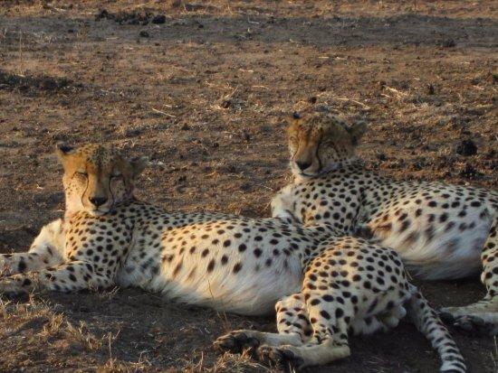 Pungwe Safari Camp Picture