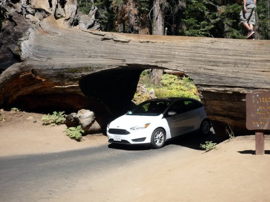 Three Rivers, Californië: Tunnel Log