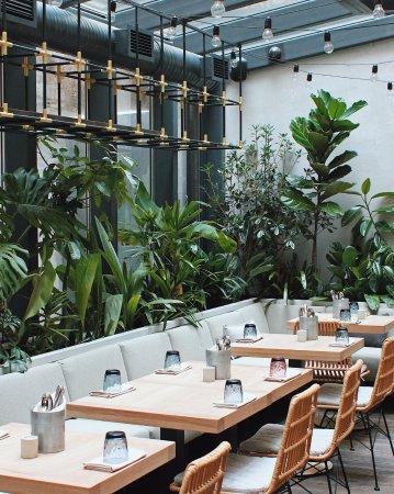 Jungle: Джунгли в самом центре города, среди которых можно вкусно позавтракать и не только)
