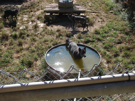 Brookville, IN: Cooling off (>90°F/32°C)