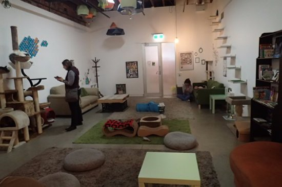 ‪Cat Cafe Melbourne‬