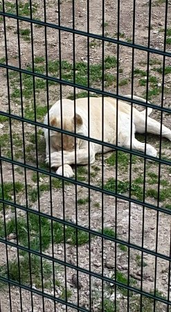 Parc Animalier de Casteil : FB_IMG_1506608530963_large.jpg