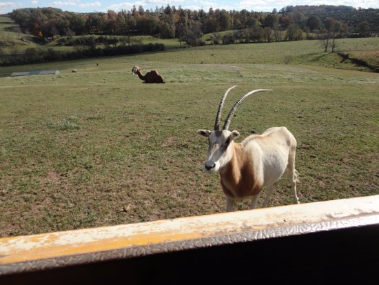 Max Meadows, VA: Animals at Fort Chiswell Animal Park