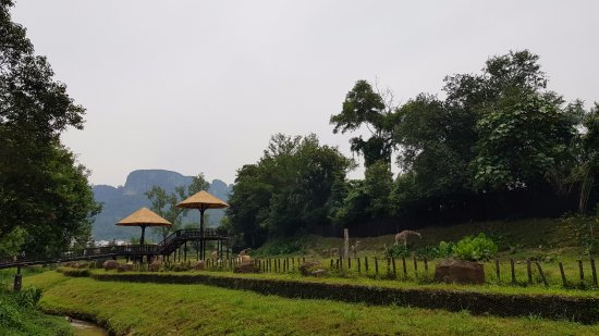 Zoo Negara: Giraffes and Zebras