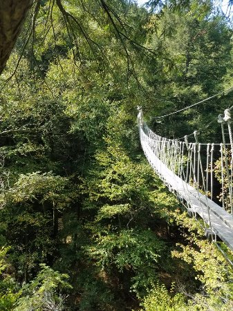 Lansing, Virginia Occidental: Tree top bridge