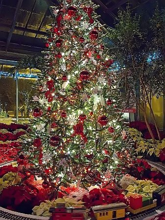 Christmas In Indianapolis.Yuletide Tree Decorated For Christmas At Garfield Picture