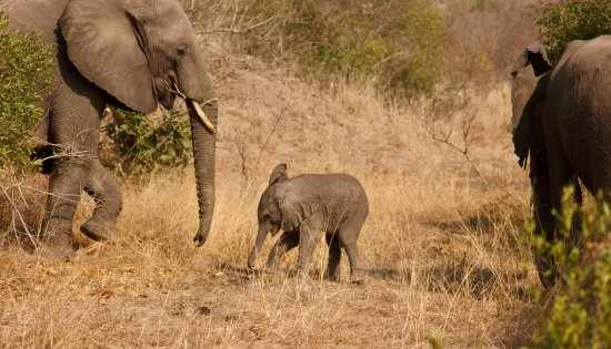 Djuma Game Reserve, Sydafrika: Elephant sighting