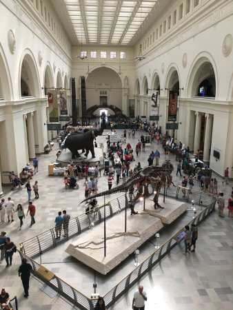 Photo of Tourist Attraction The Field Museum at 1400 S Lake Shore Dr, Chicago, IL 60605, United States