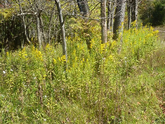 Little Canaan Wildlife Management Area