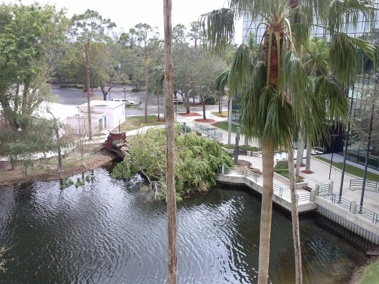 Hilton Boca Raton Suites: View of Downed Tree From Hurricane Irma (Hotel in Good Condition)