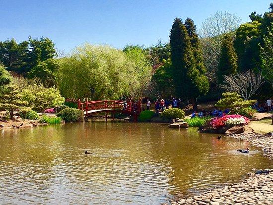 Japanese Garden: photo0.jpg