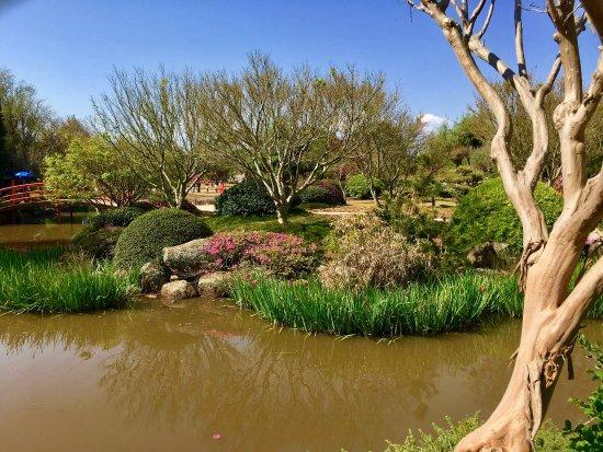 Japanese Garden: photo3.jpg