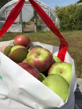 C. N. Smith Farm: Bushel of apples