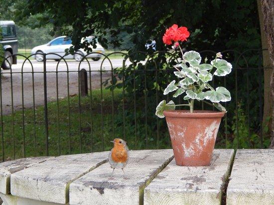 Erddig: Tea Garden