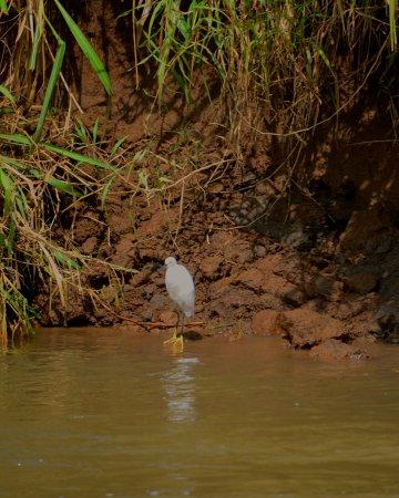 Jungle Crocodile Safari: Bird