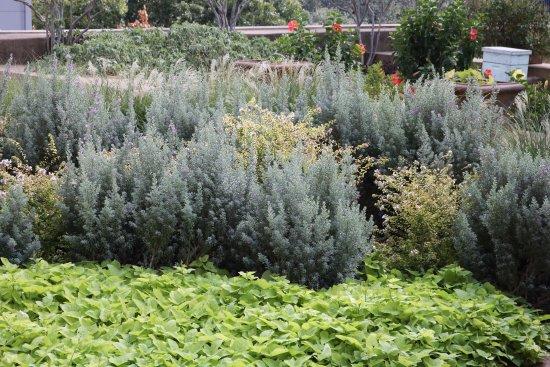 The Fairmont Dallas: Rooftop Garden