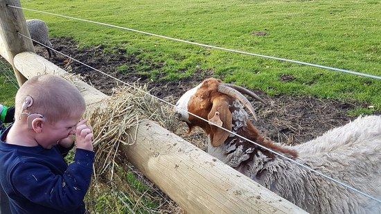 Taunton Farm Holiday Park Photo